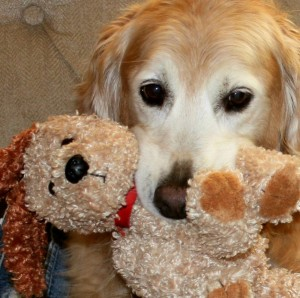 Me & Grandpa's Stuffed Golden