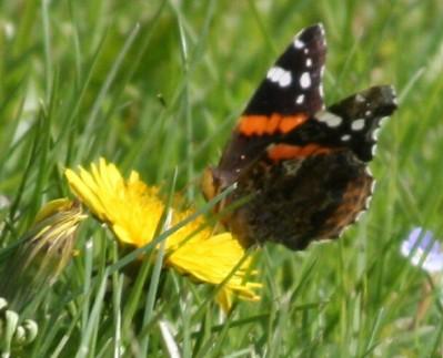 """""""Butterfly & Dandelion"""""""
