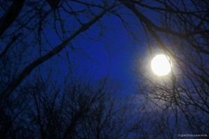 img_8599_bluemoon_Ogle