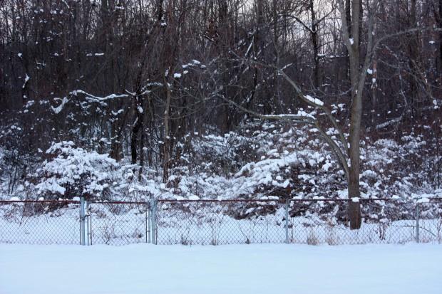 img_1123_blog_woods