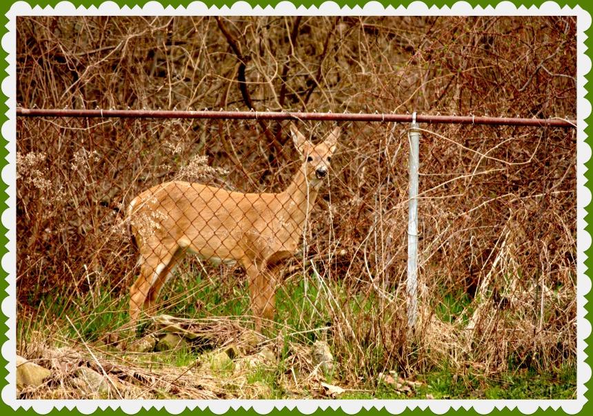 deer_2015