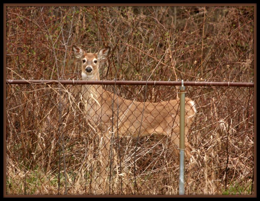 deer_2015_2