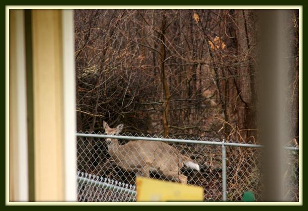 deer_2015_4