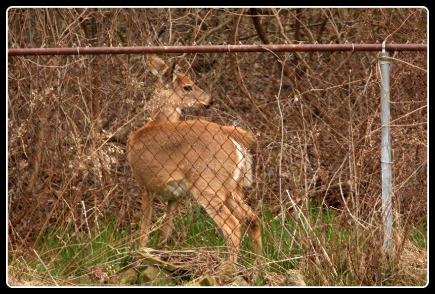 deer_2015_5