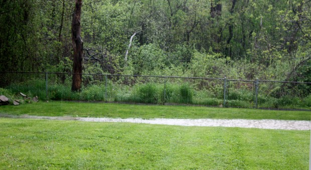 A River Runs Through The Gully In Michele's Dry Wasteland (backyard-2011).