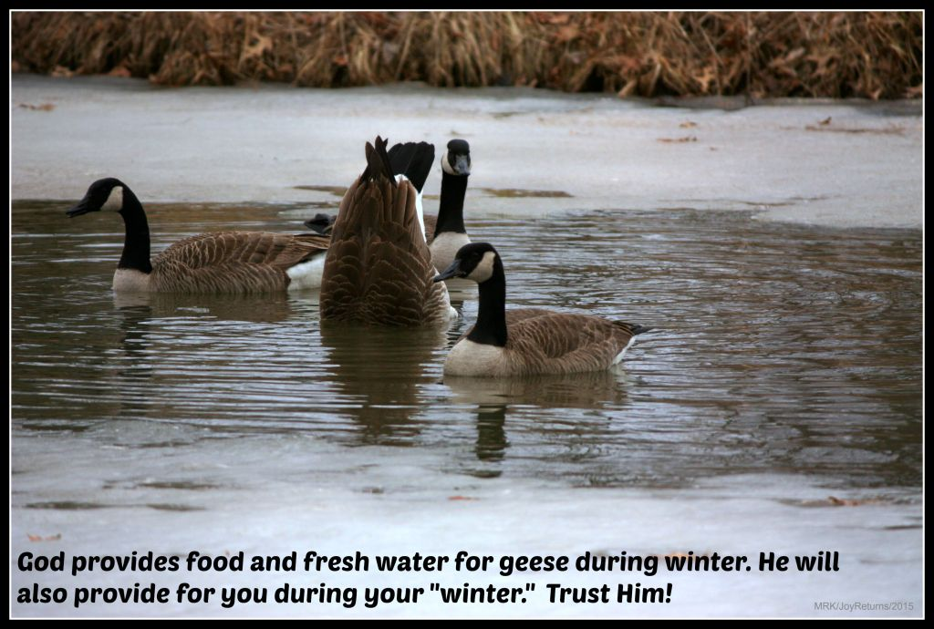 img_1342_geese2_quote