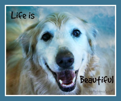 Life is beautiful2