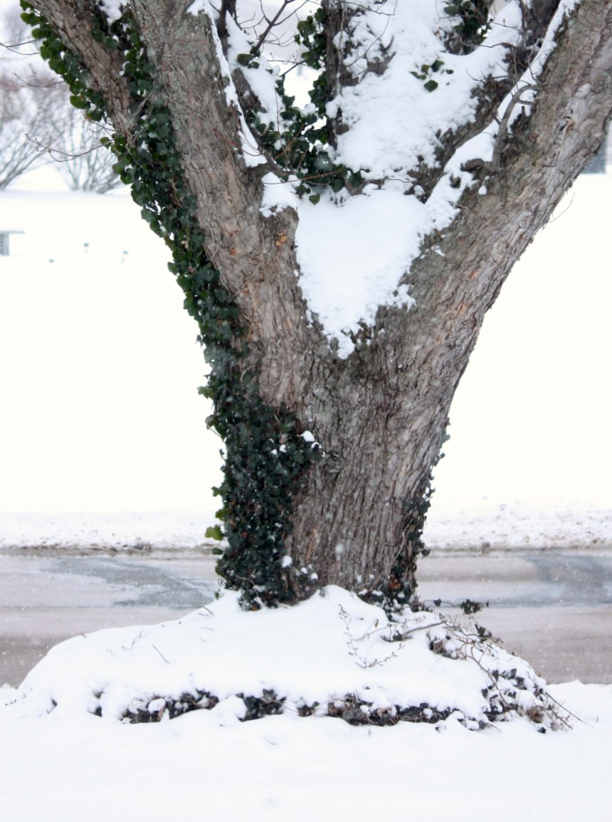 Year_End_Tree_4