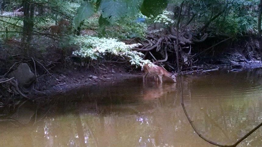 Deer_2_2018