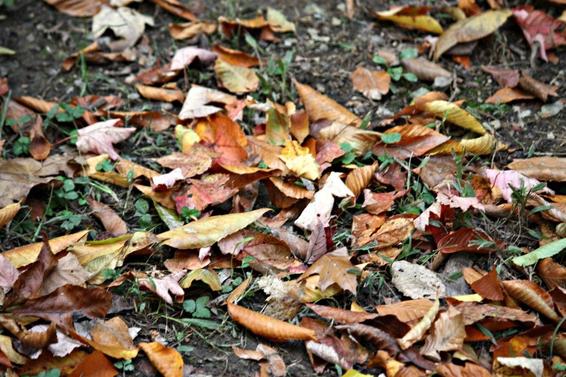 Natures_floor_3